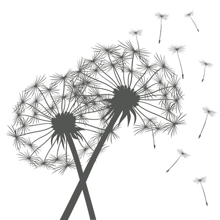 overblown: Romantic Illustration of Dandelions.