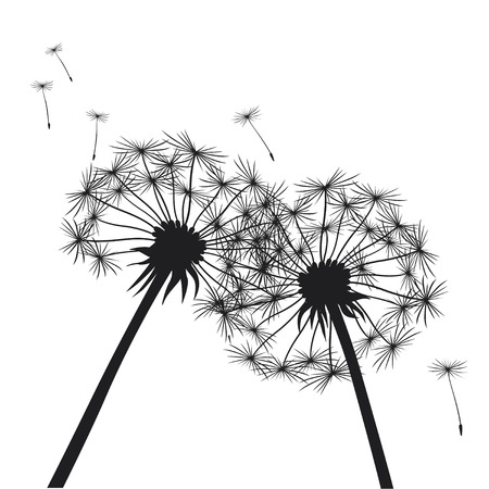 dandelion seed: Romantic Illustration of Dandelions.