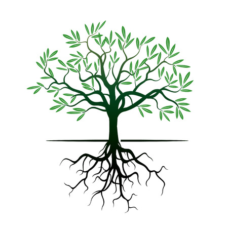 arbol raices: Árbol y raíces Verde.
