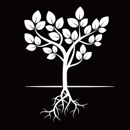 on white: White tree and Roots