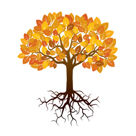 autumn tree: Illustration of Autumn Tree