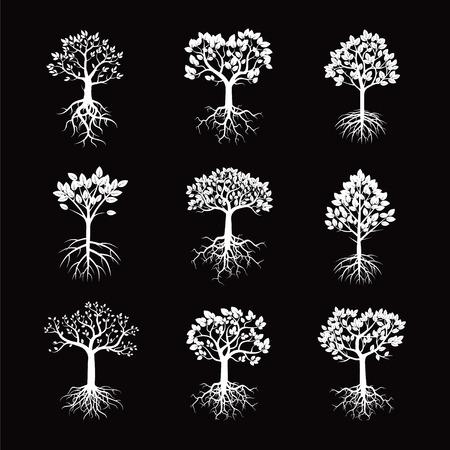 planta con raiz: la recogida de vectores blanco. �rboles y ra�ces. Vectores