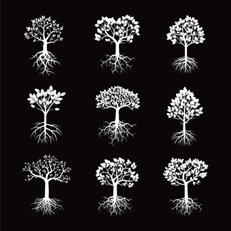 tree of life silhouette: White vector collection. Trees and Roots.