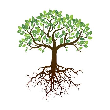 色木と根。ベクトルの図。