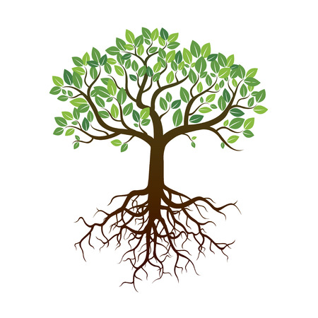 Color Tree and Roots. Vector Illustration. Stock Illustratie
