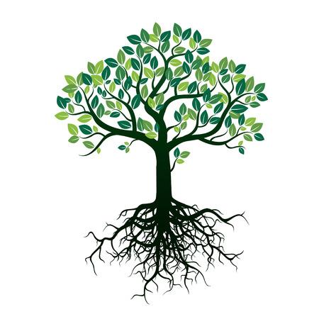 Kolor Kształt drzewa i korzenie. Ilustracja wektora.