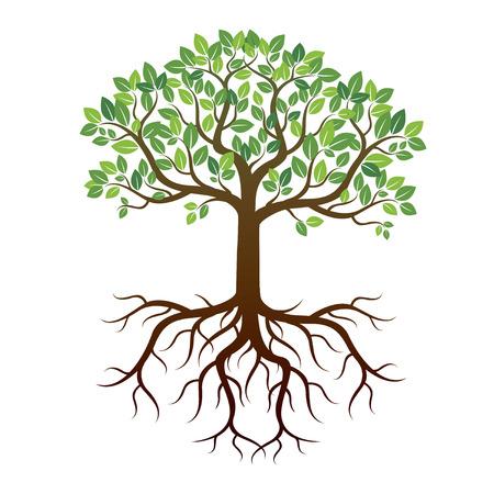 Zielone drzewo i korzenie. Ilustracja wektora.