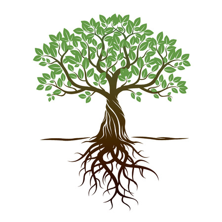 Color Tree Roots and background. Vector Illustration. Vettoriali