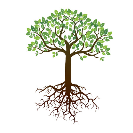 Farbe Baum-Wurzeln und Hintergrund. Vektor-Illustration.