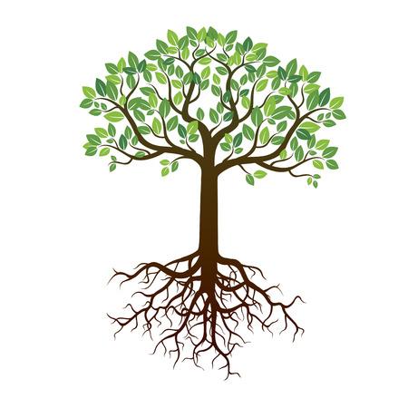 Kolor Drzewo Korzenie i tła. Ilustracja wektora.
