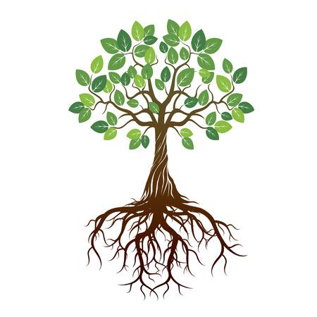 raices de plantas: �rbol de color Ra�ces y fondo. Ilustraci�n del vector.