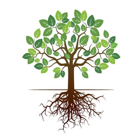 Árbol verde y raíces. Ilustración del vector.