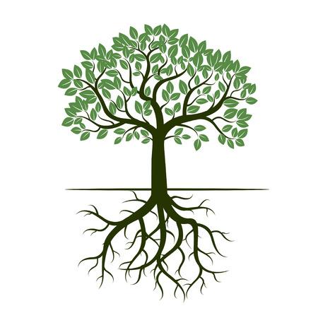 raices de plantas: Árbol verde y raíces. Ilustración del vector.