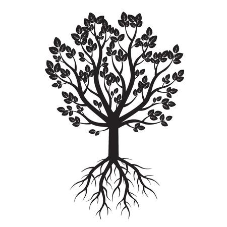 Albero bianco e radici. Illustrazione vettoriale.