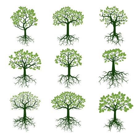 arbol raices: Conjunto de árboles verdes. Ilustración del vector.