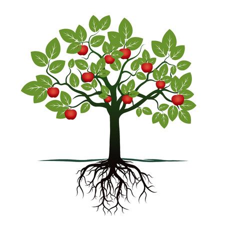 planta con raiz: Manzano verde. Ilustración del vector. Vectores