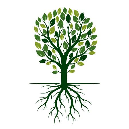 Green Eco Boom en wortels. Vector Illustratie.