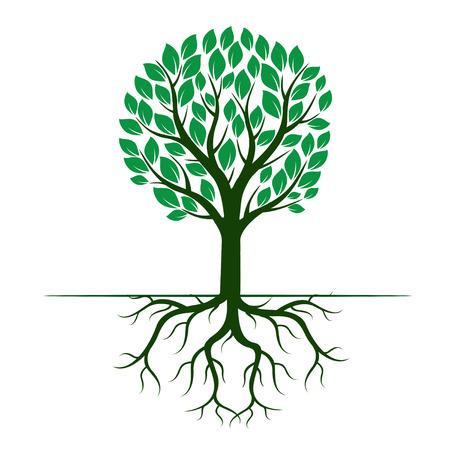 Groene vector Boom en Wortels Stock Illustratie