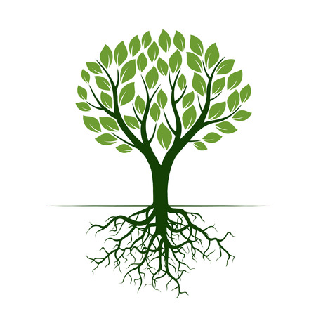 Green vector Tree and Roots