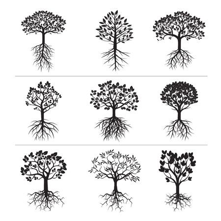Zestaw czarnych drzew i korzeni. Ilustracje wektorowe
