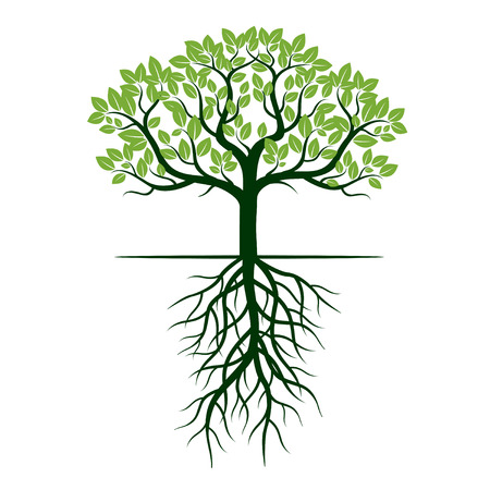Grüner Baum und Wurzeln. Vektor-Illustration. Vektorgrafik