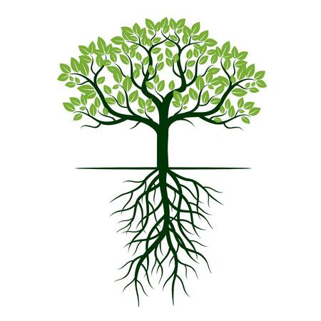 Zielone drzewo i korzenie. Ilustracja wektora. Ilustracje wektorowe