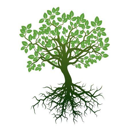 Árbol verde y raíces. Ilustración del vector. Ilustración de vector
