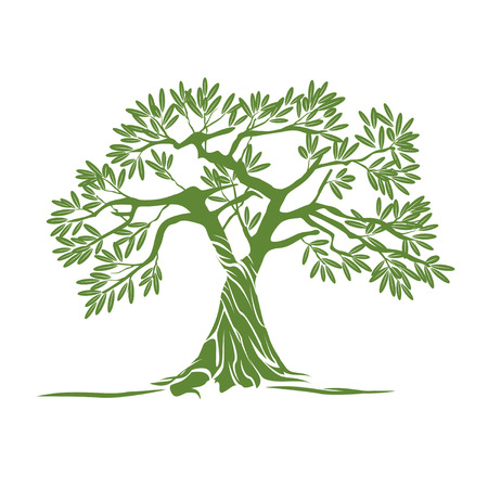 green olive: Green Olive Tree. Vector Illustration. Illustration