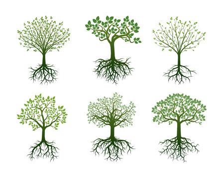 뿌리와 녹색 나무의 집합입니다. 벡터 일러스트 레이 션. 일러스트