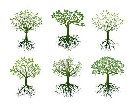Set of Green Trees with Roots. Vector Illustration.