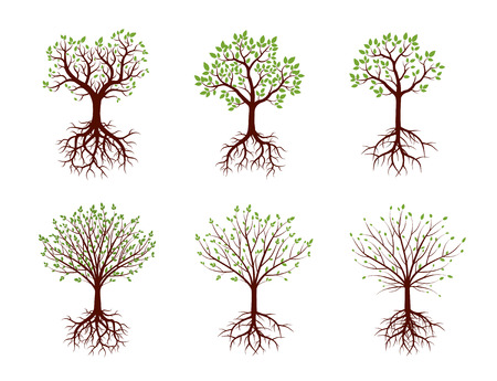 sketched shapes: Set of Trees with Roots. Vector Illustration.