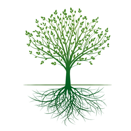 sketched shapes: Green Tree and Roots. Vector Illustration.