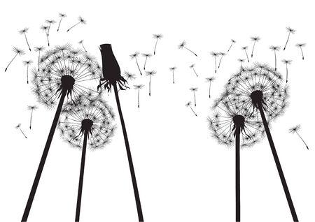 plant delicate: Vector Illustration of black dandelions.
