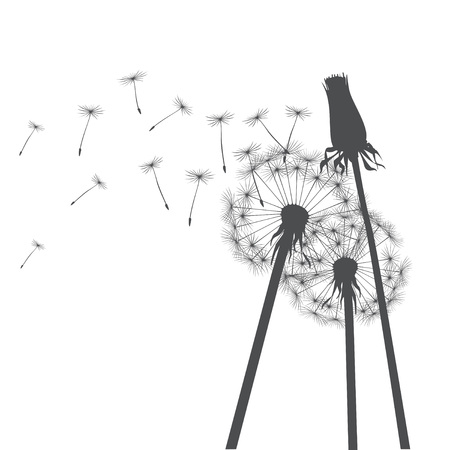 posterity: Vector Illustration of dandelions. Illustration