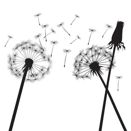 plant delicate: Vector Illustration of dandelions. Illustration