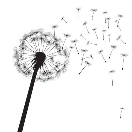 posterity: Vector Illustration of dandelion. Illustration