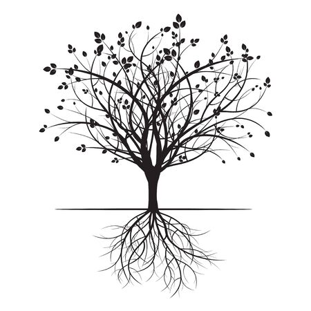 Black Tree and Roots.