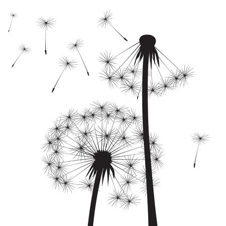 dandelions: Black Dandelions. Vector Illustration Illustration