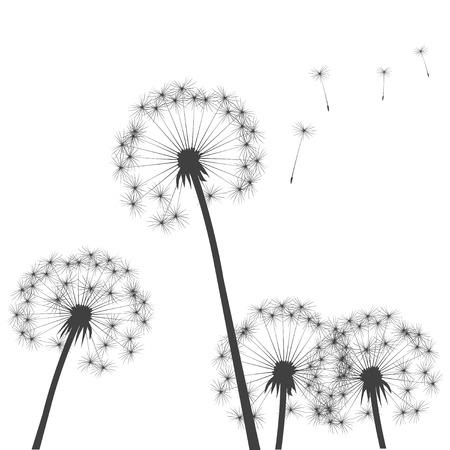 Black Dandelions. Vector Illustration Illustration