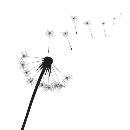 overblown: Black Dandelions. Vector Illustration Illustration