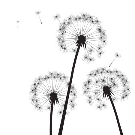 dandelions: Black Dandelions. Vector Illustration. Illustration
