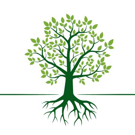 Groene boom en wortels. Vector illustratie