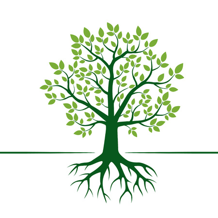 Green Tree and Roots. Vector Illustration