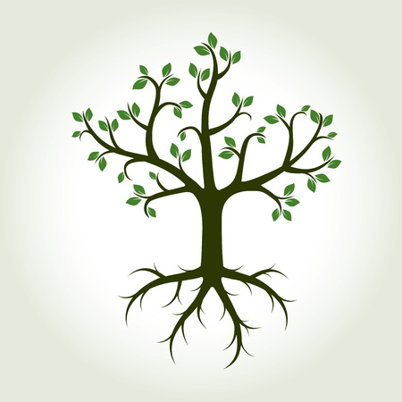 tree: Green Tree with Roots and Leafs. Vector Illustration. Illustration