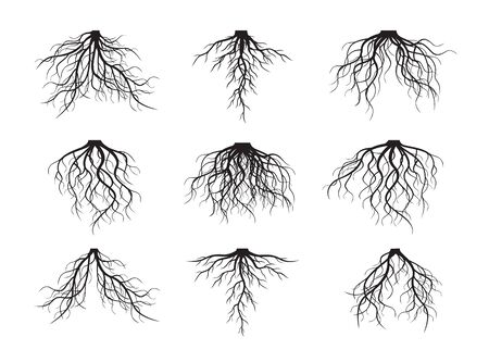 Set Black Roots. Vector Illustration and Graphic Element.
