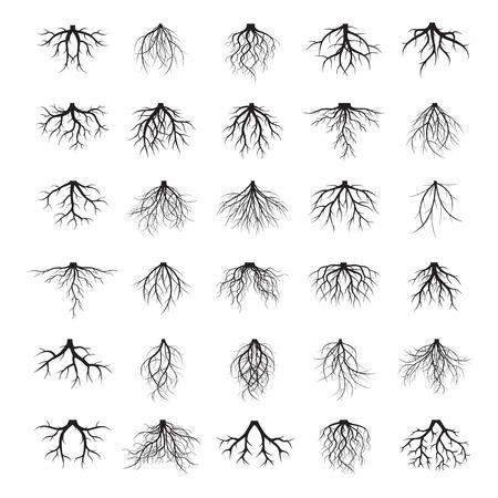Colección de raíces negras. Ilustración del vector