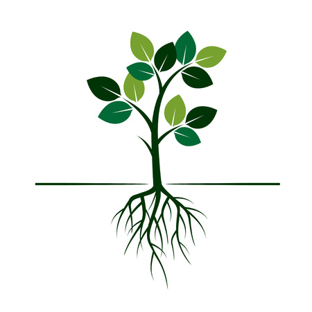 Ypung green tree with roots. Vector Illustration. Illustration