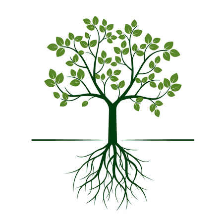 nature Green Tree with Roots. Vector Illustration. Vettoriali