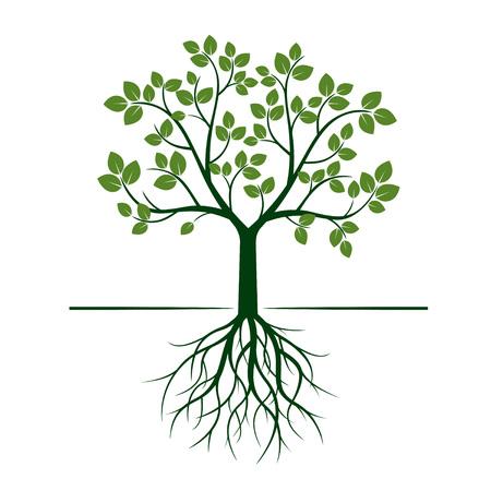 Natura Albero verde con radici. Illustrazione vettoriale Archivio Fotografico - 75878356