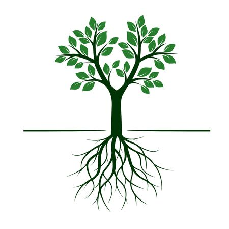 tree: Green Tree with Roots. Vector Illustration.